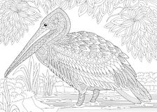 Zentangle Stylized Pelican Stock Photography