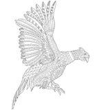 Zentangle stylized pheasant bird Stock Images