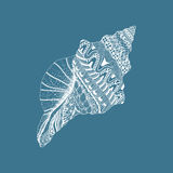 Zentangle stylized sea cockleshell. Hand Drawn aquatic doodle ve. Ctor illustration  on blue background. Sketch for tattoo or makhenda. Seashell collection Stock Photography
