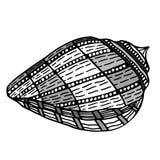 Zentangle stylized shell. Royalty Free Stock Photos