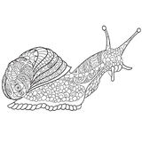 Zentangle stylized snail Royalty Free Stock Images