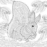 Zentangle stylized squirrel. Coloring page of squirrel sitting on oak tree branch and eating pine cone. Freehand sketch drawing for adult antistress coloring Royalty Free Stock Photography