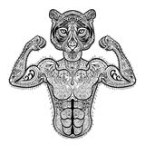 Zentangle stylized strong Tiger. Hand Drawn sport vector illustr. Ation isolated on white background. Vintage sketch for tattoo design or makhenda. Animal art Stock Photo