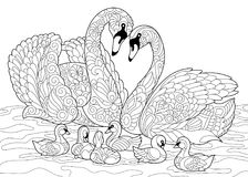 Zentangle stylized swan birds family. Coloring book page of swan birds family. Freehand sketch drawing for adult antistress colouring with doodle and zentangle Stock Photography