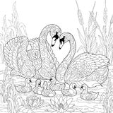 Zentangle stylized swan birds family. Coloring book page of swan birds family, lotus flowers and reed grass. Freehand sketch drawing for adult antistress Royalty Free Stock Photography