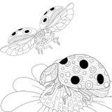 Zentangle stylized two ladybugs Stock Photo
