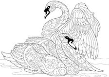 Zentangle stylized two swans. Stylized couple of swans swimming in the pond or lake water. Freehand sketch for adult anti stress coloring book page with doodle Stock Image