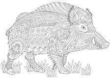 Zentangle stylized wild boar Stock Photos