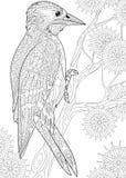 Zentangle stylized woodpecker Stock Photo