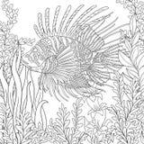 Zentangle Stylized Zebrafish (lionfish) Stock Photos