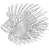 Zentangle stylized zebrafish (lionfish) Royalty Free Stock Photography