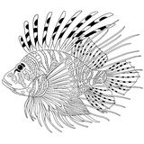Zentangle stylized zebrafish (lionfish) Stock Photos