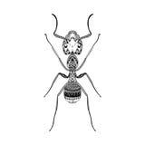 Zentangle stylizował Czarnej mrówki Ręka Rysujący termit ilustracja wektor