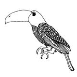 Zentangle toucan doodle on white background.Graphic illustration vector zentangle ready for coloring. Royalty Free Stock Photos