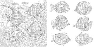 Zentangle tropical fishes Stock Photo