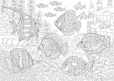 Zentangle tropical fishes Royalty Free Stock Images