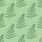 Zentangle vector Fern seamless pattern. Ornamental tribal Grass Stock Images