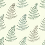 Zentangle vector green Fern seamless pattern. Ornamental tribal. Grass illustration for fabric, decoration. Hand drawn plant sketch Stock Photography
