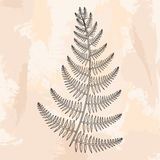 Zentangle vector male Fern for tattoo in boho, hipster style. Or Royalty Free Stock Photos