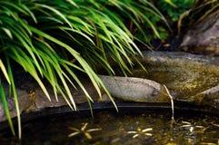 Zenteichgartendetailwasserstrom und -laub stockfotografie
