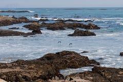 Zentrale Kalifornien-Küste 8519 Stockfoto