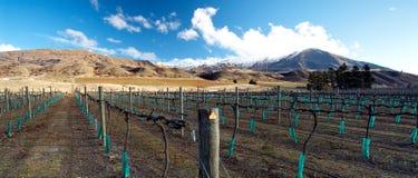Zentrale Otago Weinkellerei im Winter lizenzfreie stockfotos