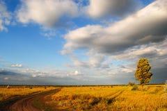 Zentrale Ukraine-Landschaft Stockbilder