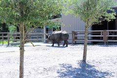 Zentraler FL-Zoo in Sanford FL Stockbilder