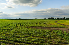 Zentrales Illinois-Ackerland Stockbild