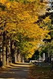 Zentralfriedhof em Viena, Áustria em um dia do outono fotos de stock royalty free