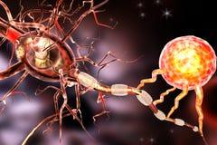 Zenuwcellen, concept voor Neurologische Ziekten, tumors en hersenenchirurgie Stock Fotografie
