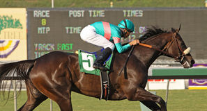 Zenyatta Wins The Lady's Secret Stakes Royalty Free Stock Photography