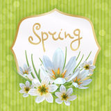 Zephyranthes spring. Beautiful spring background with flowers of Zephyranthes. Can be used to design greeting cards, invitation, announcement spring sale stock illustration