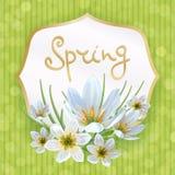 Zephyranthes spring Stock Photos