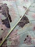 Zerbröckelndes Blatt Stockbild