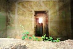 Zerbrechliche Anlage, die in einem verlassenen Haus wächst Stockfotos