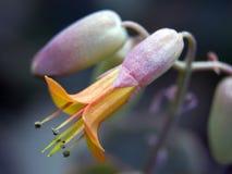 Zerbrechliche Blume Stockbild