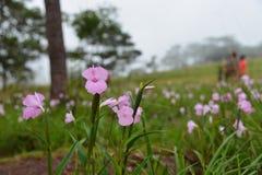 Zerbrechlicher Berg der Blume Lizenzfreie Stockfotografie