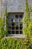 Zerbrochene Fensterscheibe mit Reben Stockbilder