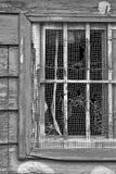 Zerbrochene Fensterscheibe in Schwarzweiss Stockfoto