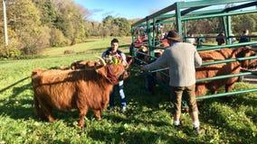 Zeremonieller Abfall des Viehs von den Sommerweiden im schwäbischen Alb Lizenzfreie Stockfotografie