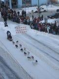 Zeremonieller Anfang des Iditarod Lizenzfreie Stockfotos