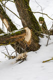 Zerfressen weg von den Bäumen lizenzfreies stockbild