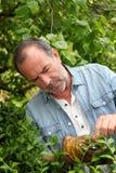 Zerlegungsbetriebe des älteren Mannes im Hausgarten Lizenzfreies Stockfoto