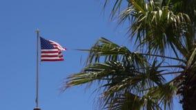 Zerlumpte amerikanische Flagge bewegt in Brise hinter eine Palme wellenartig stock video