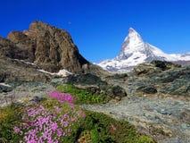 Zermatt Switzerland, green car-free city Matterhorn view flower and moon Royalty Free Stock Images