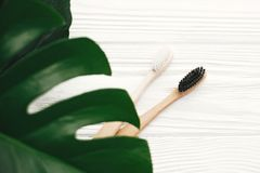 Zero waste concept. Natural eco friendly bamboo toothbrushes on. White wood with green monstera leaves. Eco products plastic free. Hygiene care and treatment royalty free stock images