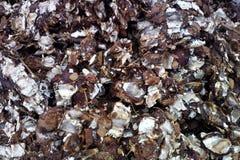Zerquetschte Kokosschale für Fertigung von pinibricket lizenzfreies stockbild