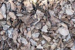Zerquetschter dunkler Beschaffenheitshintergrund der Baumrinde Zerrissene Baumrinde für Dekoration Lizenzfreie Stockfotografie