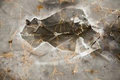Zerquetschtes Eis in einem Wald, gefrorener Teich, der Eispanzer Lizenzfreie Stockbilder